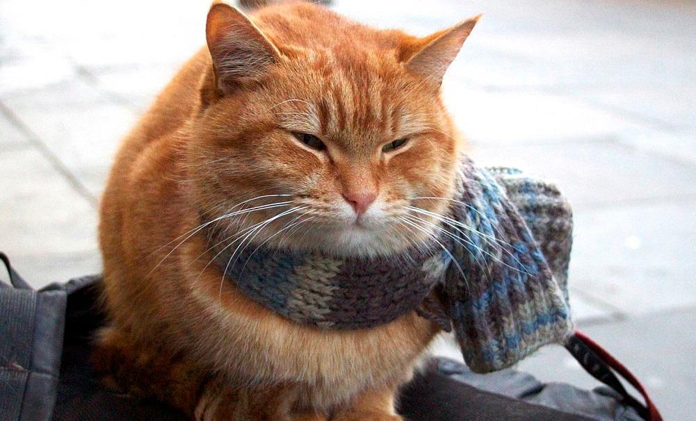 「猫の恩返し」で人生を救われた ジェームズ・ボーエンさん7