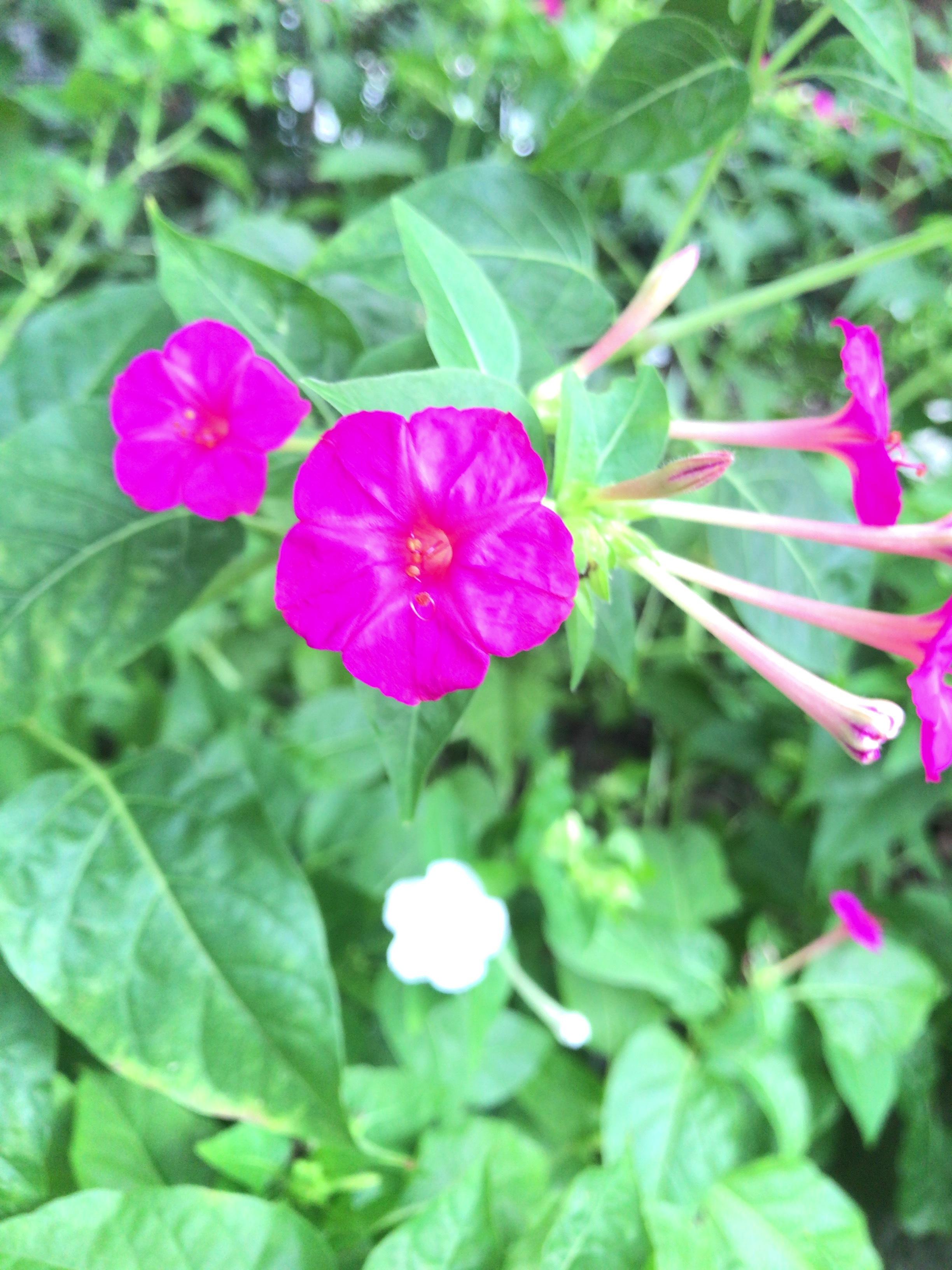 福岡に咲く花