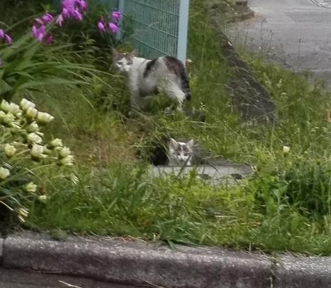アグネス 野良の子猫