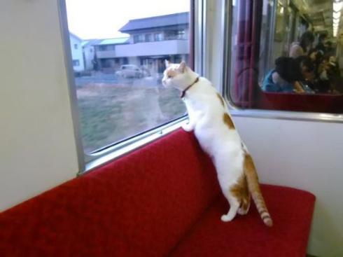 猫カフェ列車
