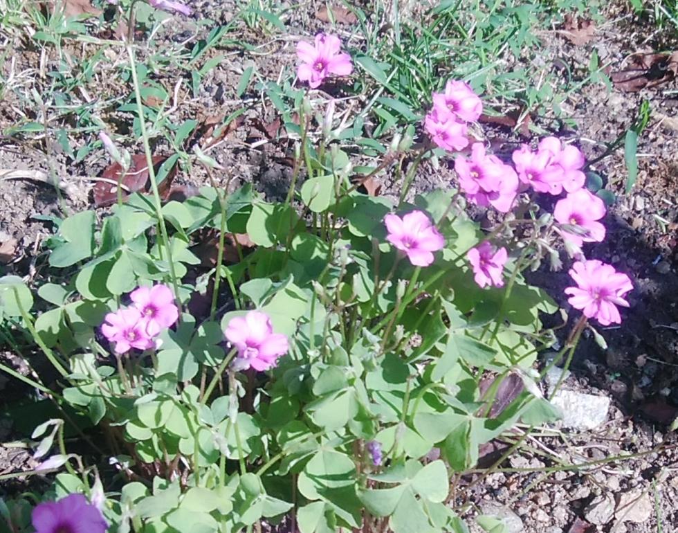 家の近くで見つけたお花2