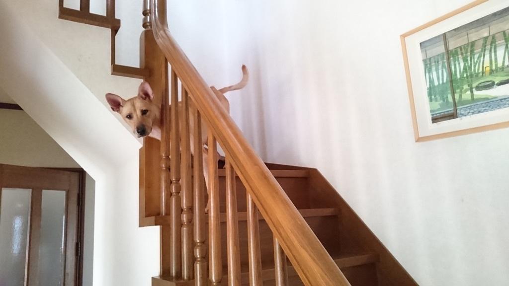 階段から見送ってくれるマリリン✨❤✨