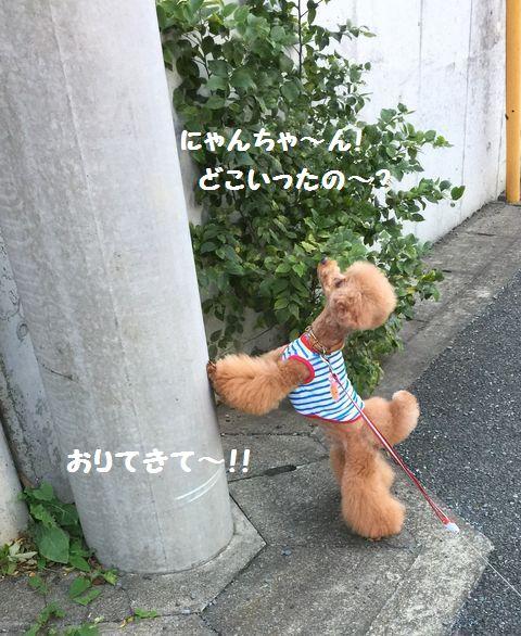 IMG_116922.jpg