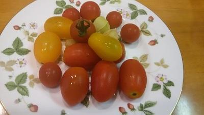 トマトいただきもの