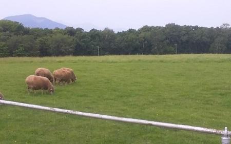 羊ヶ丘展望台羊