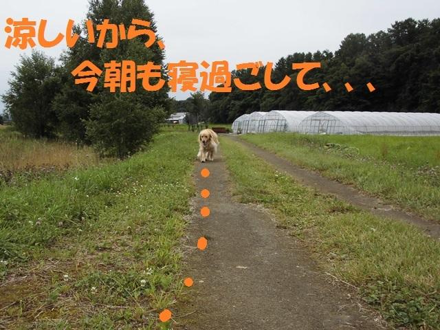 CIMG2113_P.jpg