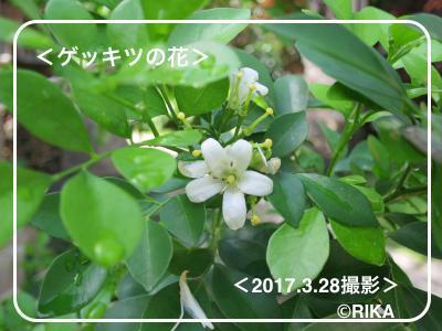 gekkitsu28/03/17