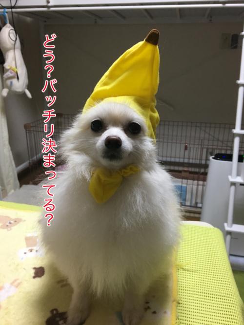IMG_7728blog.jpg