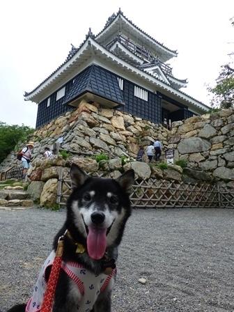 浜松城公園16