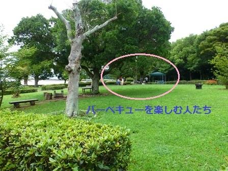 緑が浜公園35