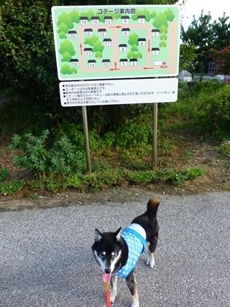 2017休暇村伊良湖ドッグラン24