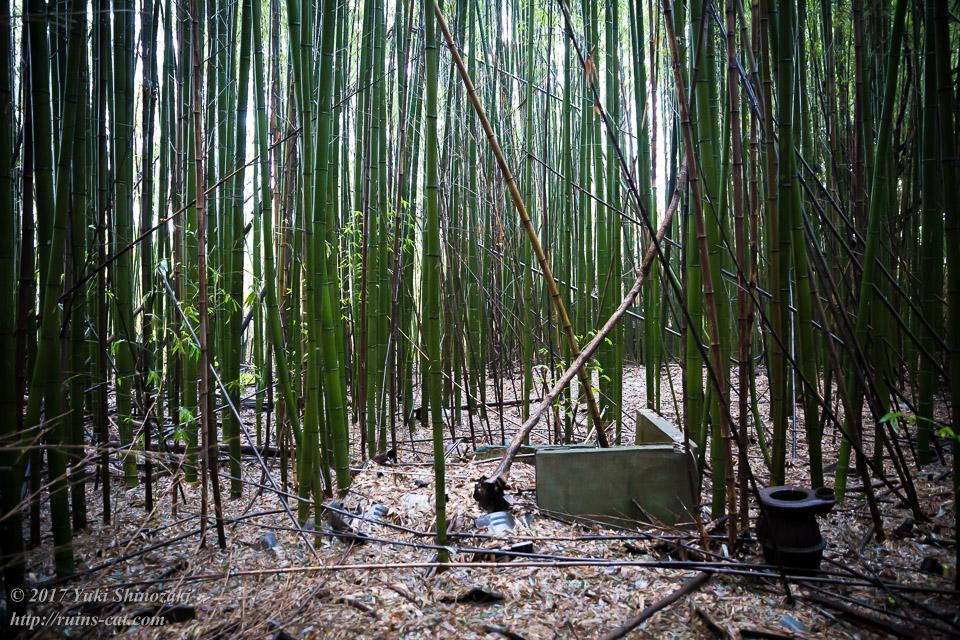 【廃墟写真】K医院_見渡す限りの竹林。古い井戸の跡らしきものも。