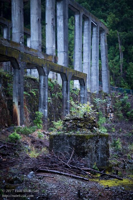 紀州鉱山(紀和鉱山)_コンクリートと緑01