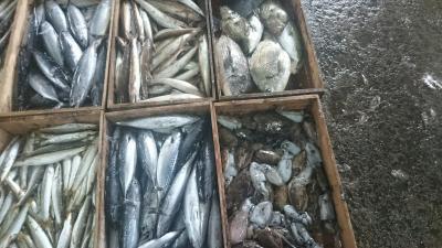 漁師直送の鮮魚20170927‐3