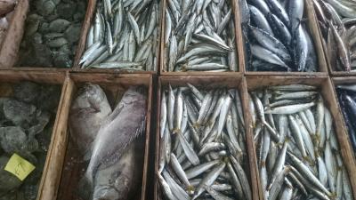 漁師直送の鮮魚20170927‐2