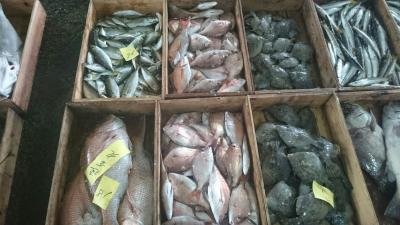 漁師直送の鮮魚20170927‐1