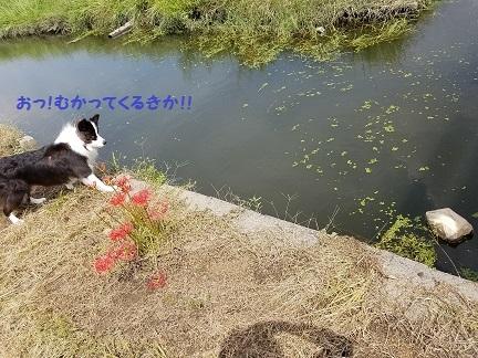 20170919_122222 - コピー