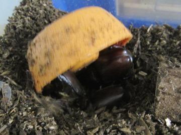 beetle2017_1.jpg