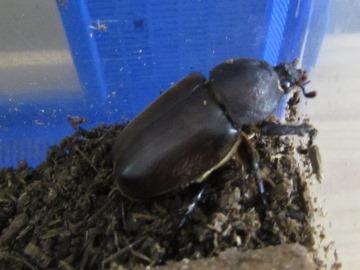 beetle2017_2.jpg