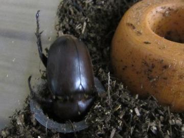 beetle2017_3.jpg