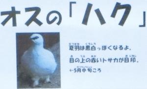 飯田動物16