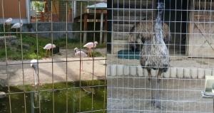 飯田動物19