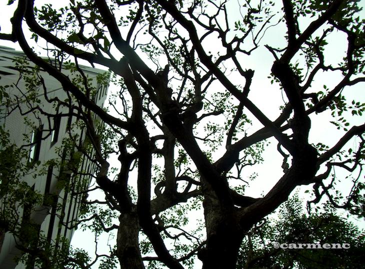壁紙のような樹木写真