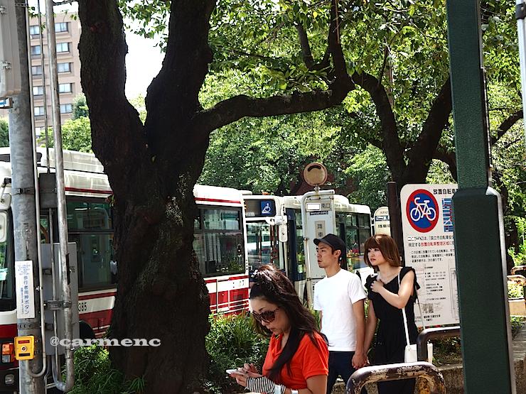 夏駅前樹木