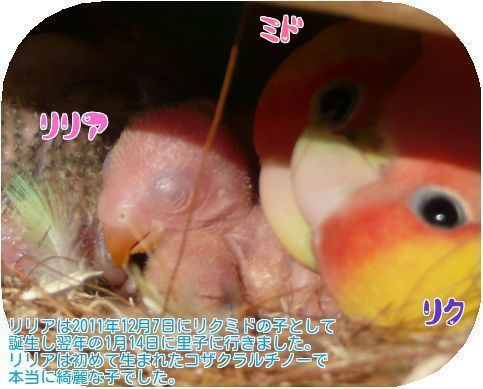 ⑤リリア誕生の時