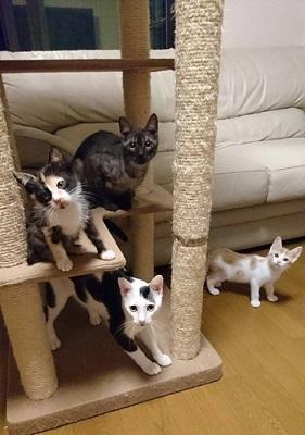 幻の猫 1505644002359