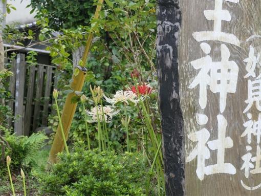 05 myoken higanbana 02