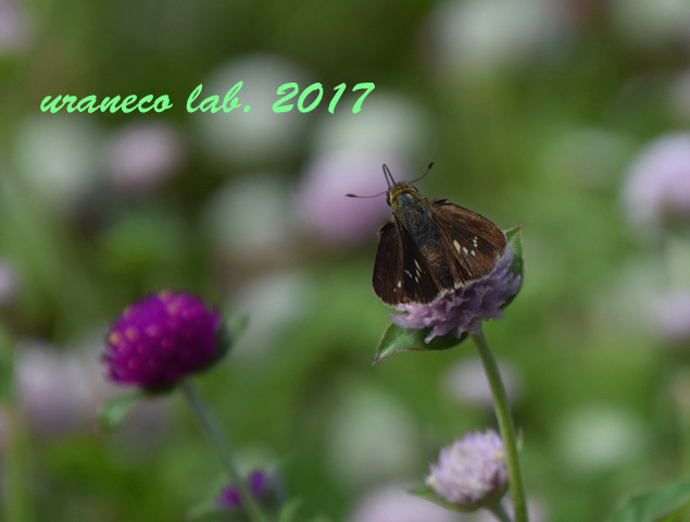 9月20日花と蝶5