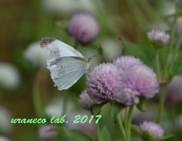 9月20日花と蝶4