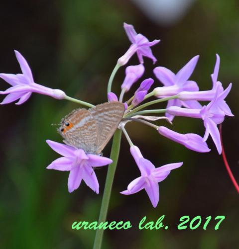 9月22日花と蝶4