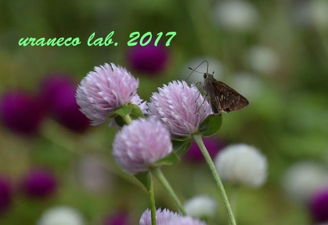 9月20日花と蝶3