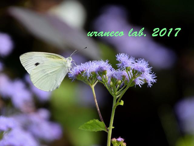 9月20日花と蝶2