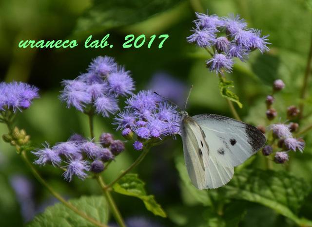 9月20日花と蝶