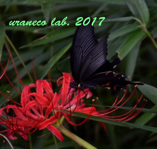 9月22日花と蝶