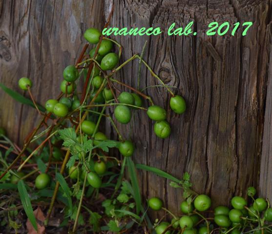 9月22日green