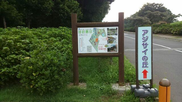 道の駅赤城の恵アジサイの丘2017