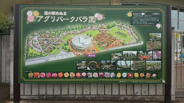 道の駅めぬまバラ園2017
