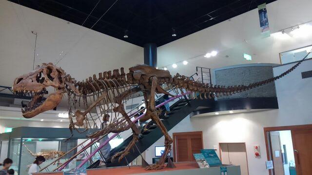 タルボサウルス・バタール2017