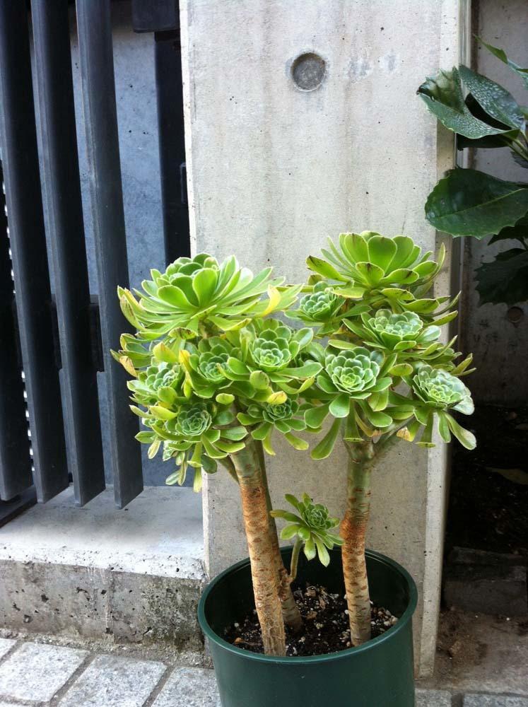 succulent20170617b2.jpg