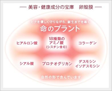 Wの卵殻膜で翌朝の肌が違う?速効性!柔軟性コラーゲン【アルマード Ⅲ型ビューティードリンク】口コミ。