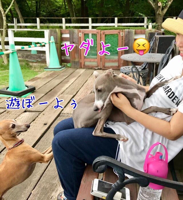 fc2blog_201707122222522d7.jpg