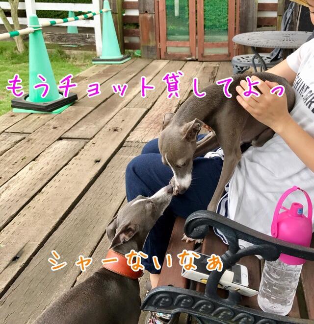 fc2blog_20170712222306fa2.jpg