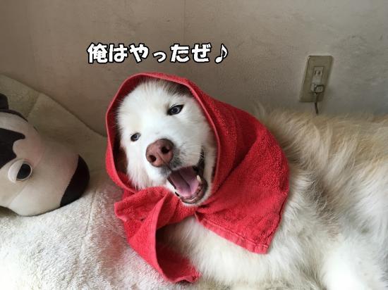 あんこ型? | sycle.com