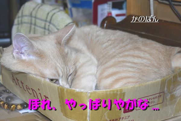 _DSC0004_20170716150101d10.jpg