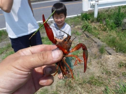 さいたま水族館 (6)