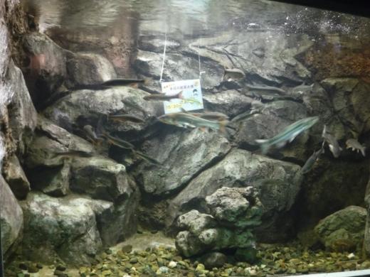 さいたま水族館 (27)